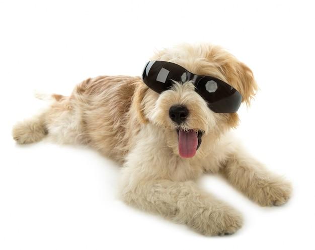 Cucciolo di cane nel bicchiere isolato su sfondo bianco