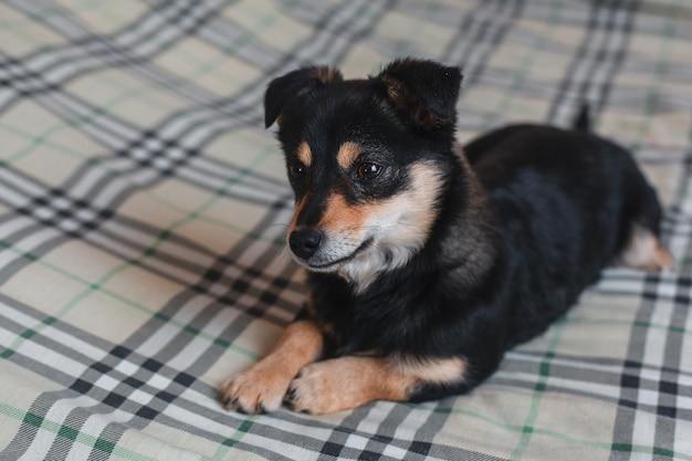 Cucciolo di cane nero che si trova al sofà