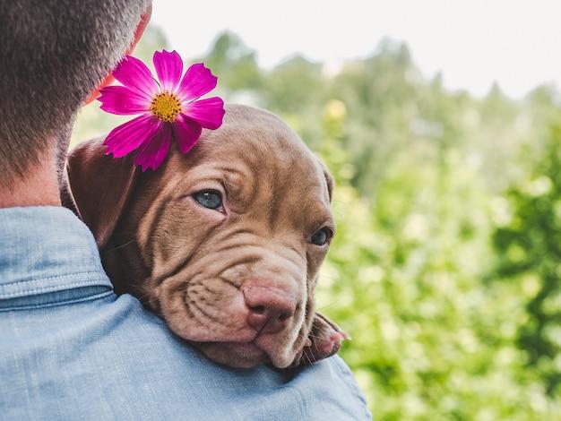 Cucciolo di color cioccolato e il suo proprietario