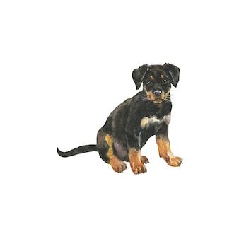 Cucciolo di rottweiler dell'acquerello. ritratto realistico disegnato a mano del cane su fondo bianco.