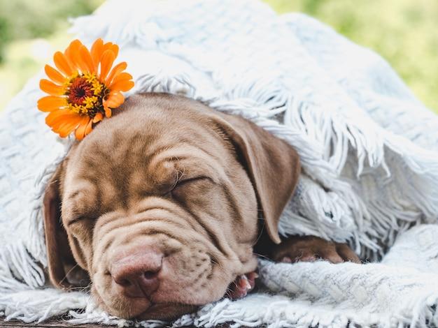 Cucciolo dolce che dorme su un morbido plaid