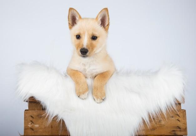 Cucciolo ibrido nascosto nel suo letto con una coltre bianca di capelli