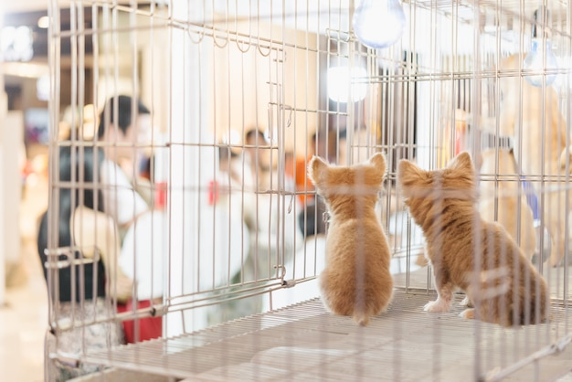 Cucciolo in gabbia per vendere nel mercato degli animali domestici, persone che comprano animali domestici dal negozio di animali
