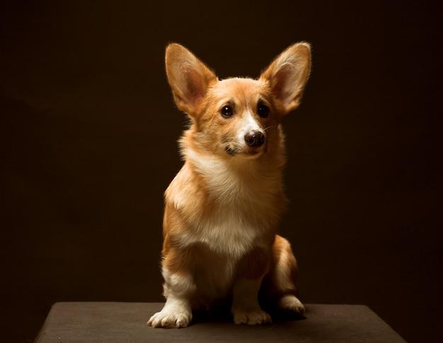 Cucciolo in posa sul podio