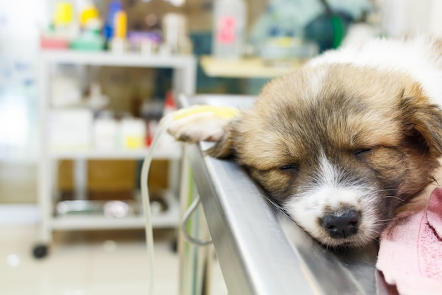 Cucciolo malato con flebo endovenoso sul tavolo operatorio