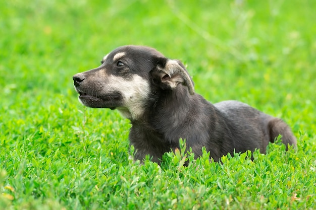 Cucciolo sull'erba
