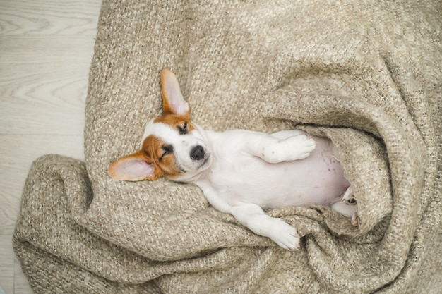 Cucciolo sveglio che dorme sulla coperta.