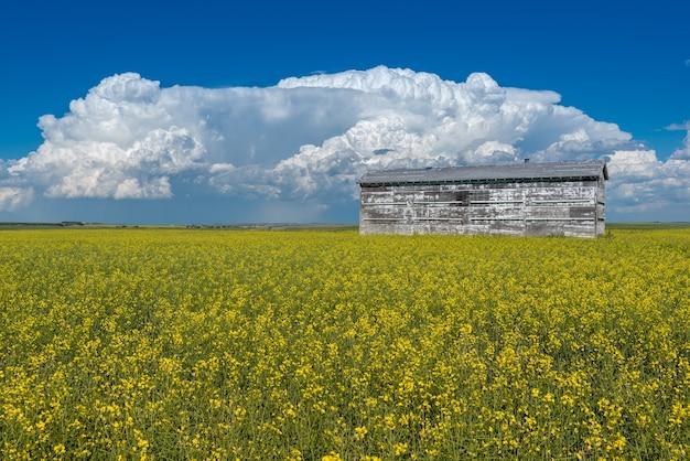 Cumulonimbus tempesta nuvole sopra un vecchio bidone di grano e un campo di colza in piena fioritura in canada