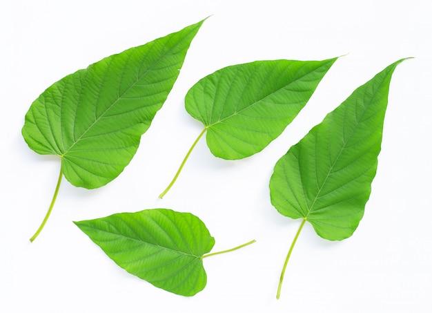Cuore delle foglie verdi a forma di su fondo bianco.