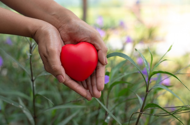 Cuore rosso del supporto della mano della donna, concetto di sanità