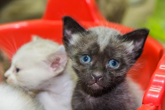 Curiosi gattini carini.