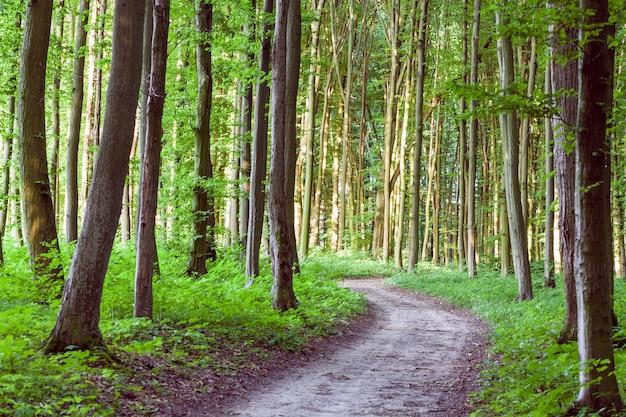 Curva sentiero attraverso la foresta verde