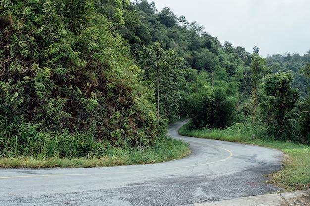 Curva stradale nella foresta
