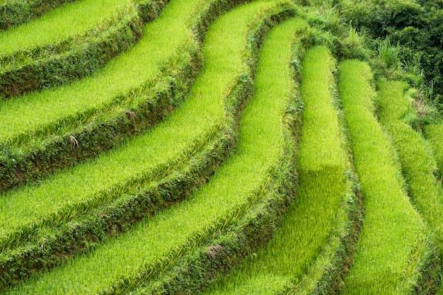 Curva terrazzata sul campo di riso sulla montagna
