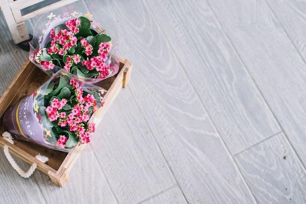 Da sopra la vista di vasi di fiori in scatola