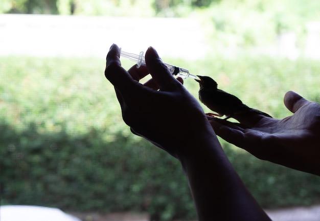 Dai da mangiare cibo a un bambino uccello