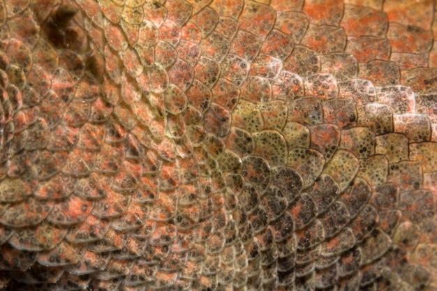 Dai un'occhiata più da vicino al camaleonte
