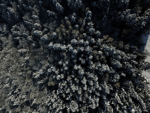Dall'alto foresta di abeti in inverno