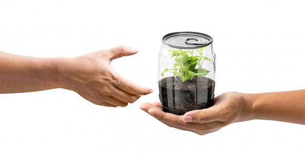 Dare una pianta in lattina
