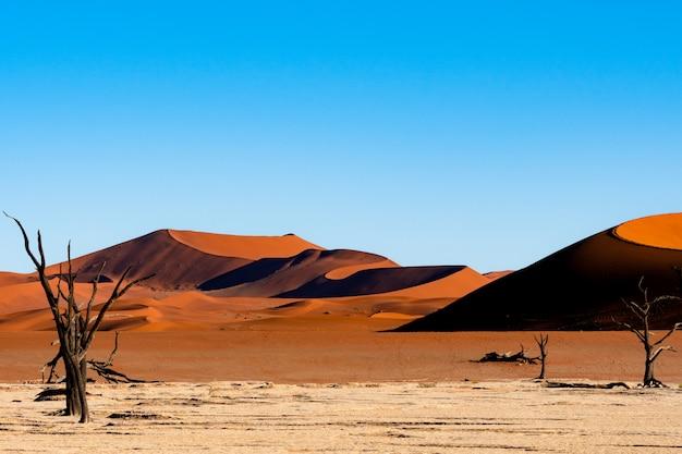 Deadvlei nel parco nazionale di namib-naukluft sossusvlei in namibia - dead camelthorn alberi contro le dune di sabbia arancione con cielo blu.