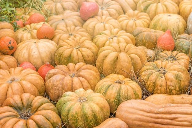 Decorazione autunnale di halloween di zucche. concetto di mercato rurale.