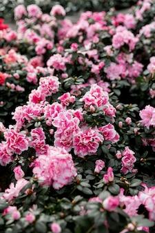 Decorazione con bellissimi fiori rosa