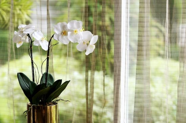 Decorazione orchidea e sfondo tenda