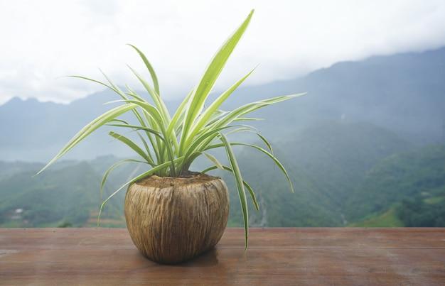 Defocused della felce in vaso delle coperture della noce di cocco sul pavimento di legno.