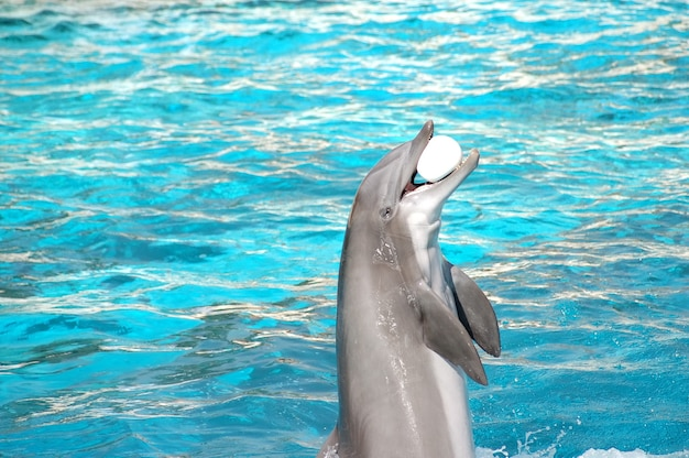 Delfino con una palla