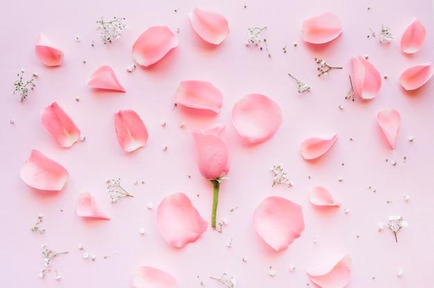 Delicata composizione di petali di rosa e piccoli fiori bianchi su uno sfondo rosa