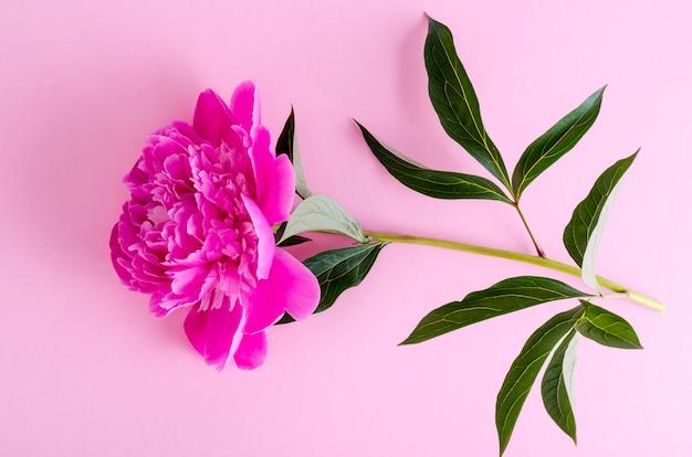 Deliziosa peonia rosa