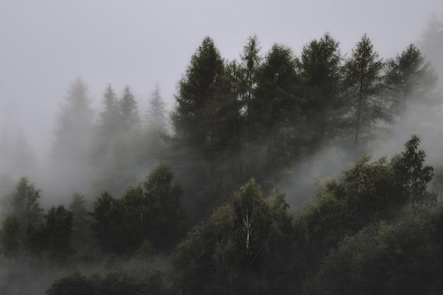 Della foresta nebbiosa