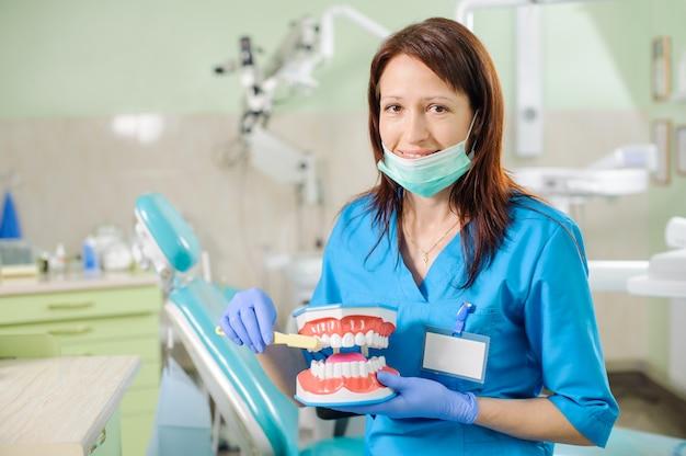 Dentista femminile che mostra modello della mascella dentaria e toothbrusht