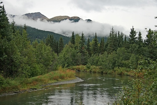 Deserto nuvole nebbia foresta alaska alberi nube