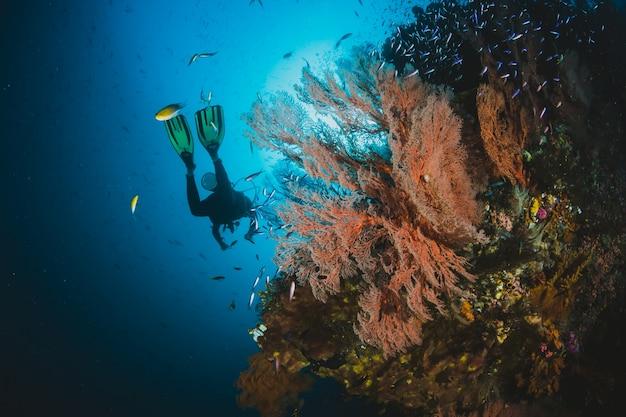 Destinazione popolare per subacquei e snorkeling.