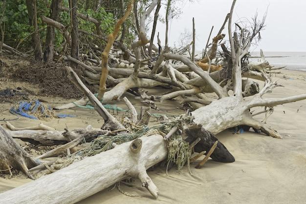 Detriti cayenne river, guyana francese