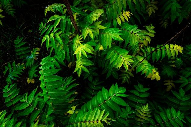 Dettaglio del terreno di una giungla, coperto di foglie verdi.