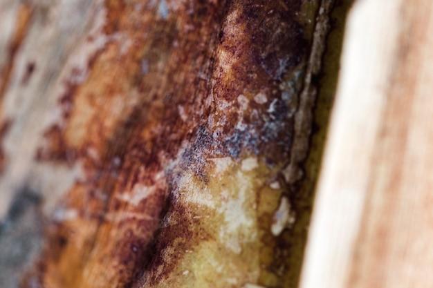 Dettaglio del tronco di legno marrone