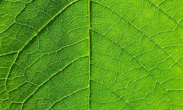 Dettaglio della foglia verde sulla luce