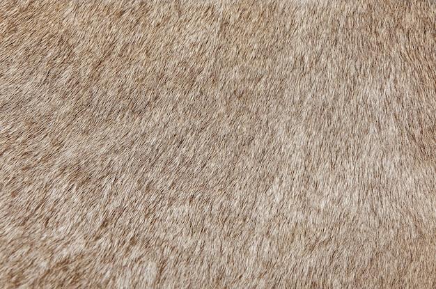 Dettaglio di una pelle di una priorità bassa di struttura della mucca