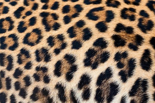 Dettaglio pelle di leopardo.