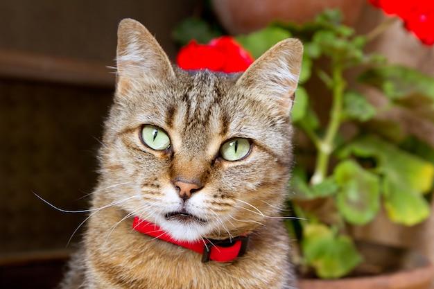 Dettaglio volto di gatto con occhi verdi e fiori
