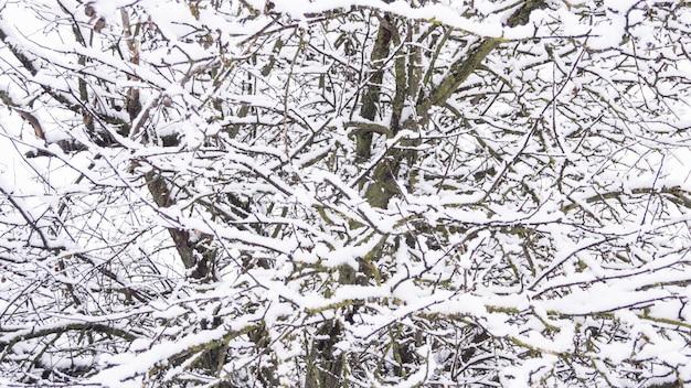 Di melo nella neve, rami nella neve, inverno nevoso.