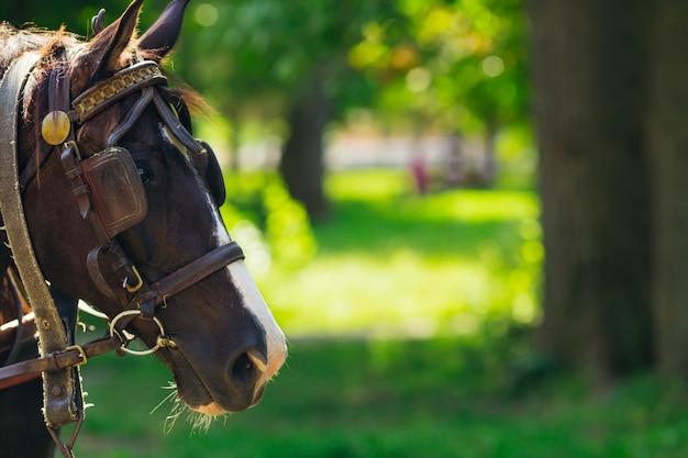 Di testa di cavallo con briglia nel parco. giorno soleggiato