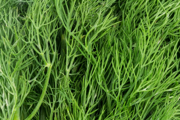 Dill lascia verde colorato testurizzato