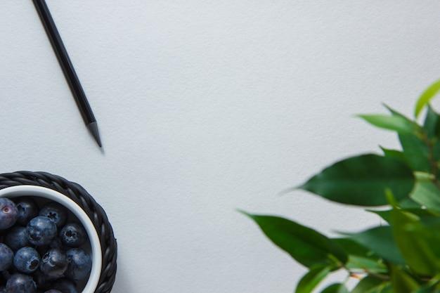 Disegni a matita con i mirtilli, pianta la vista superiore su uno spazio bianco del fondo per testo