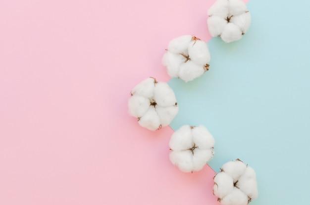 Disposizione con fiori di cotone e sfondo colorato