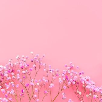 Disposizione con fiori rosa su sfondo rosa