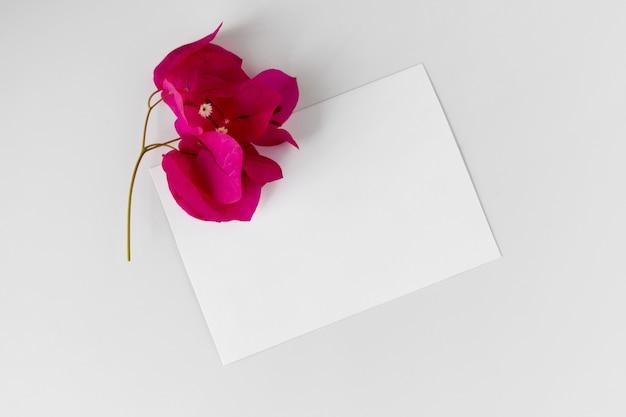 Disposizione creativa con il fiore rosa e la cartolina d'auguri vuota su fondo bianco.