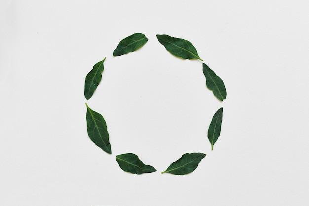 Disposizione creativa fatta di foglie grean naturali